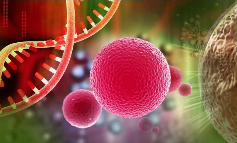干细胞能修复卵巢吗.png