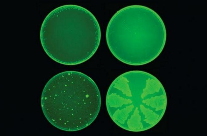 活性肽抗病毒活性和抗肿瘤活性