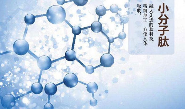 小分子肽活性强吗.png