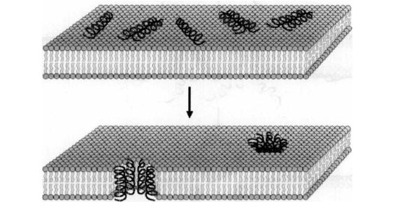 小分子肽是这样干掉细菌和病毒的!
