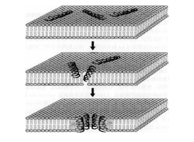 什么是抗菌肽.png
