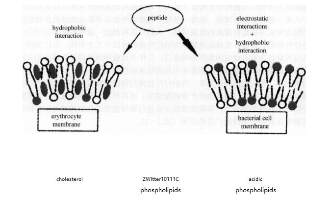 抗菌肽与抗癌.png