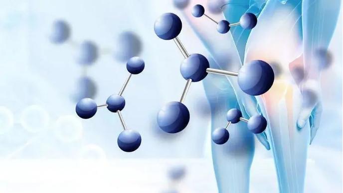 牦牛肽促进骨骼生长.png