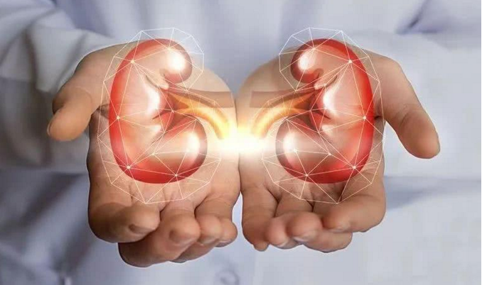 干细胞治疗肾衰竭.png