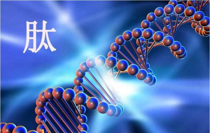 牛骨髓肽的功效.png