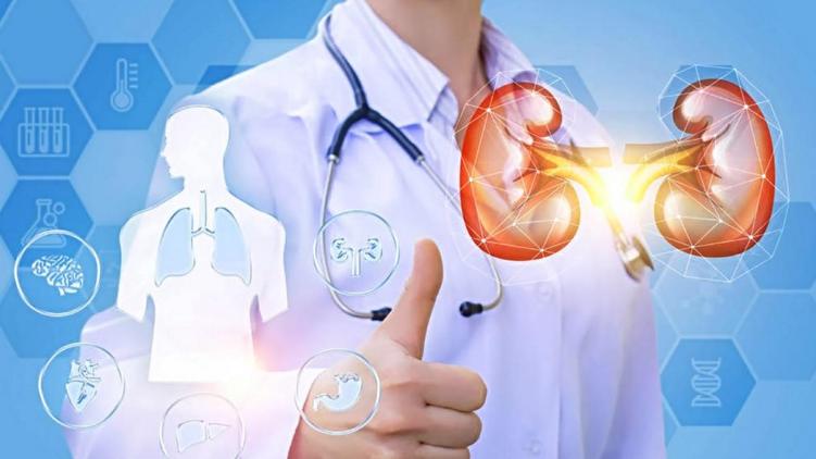 """干细胞生成""""小型肾脏"""",干细胞注射与工程技术与肾脏再生"""
