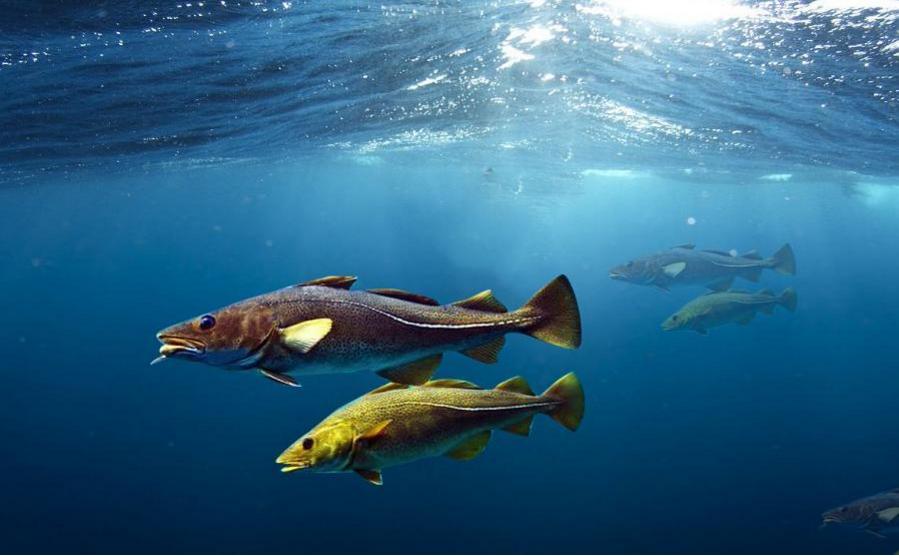 鱼胶原蛋白肽品牌.png