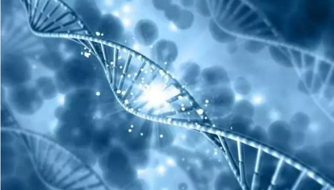 肽修复细胞.png