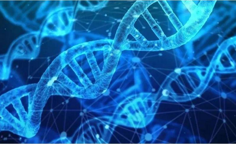 小分子肽会增加免疫力吗,肽在人体中起着抗病毒的作用